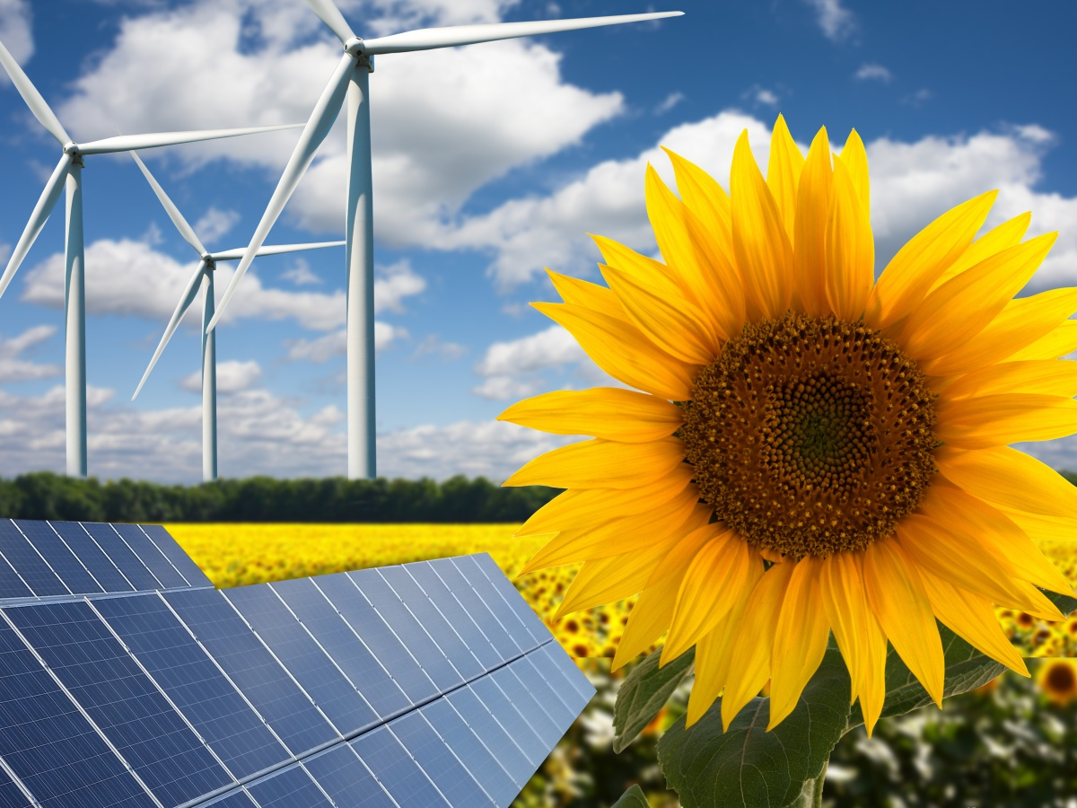 Green energy or renewables on sun flower field, wind turbines and solar panels on a hot summer day